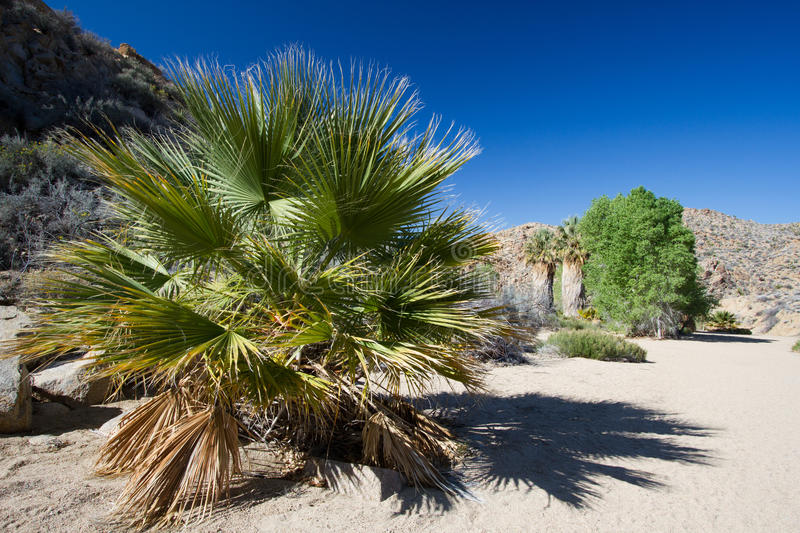 Joshua Tree National Park foto de stock royalty free