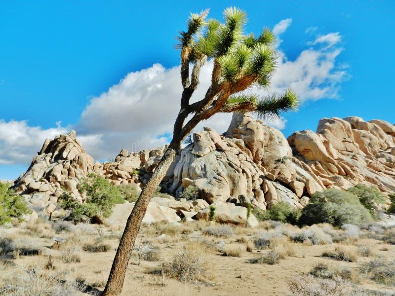 Joshua Tree National Park royalty-vrije stock afbeeldingen