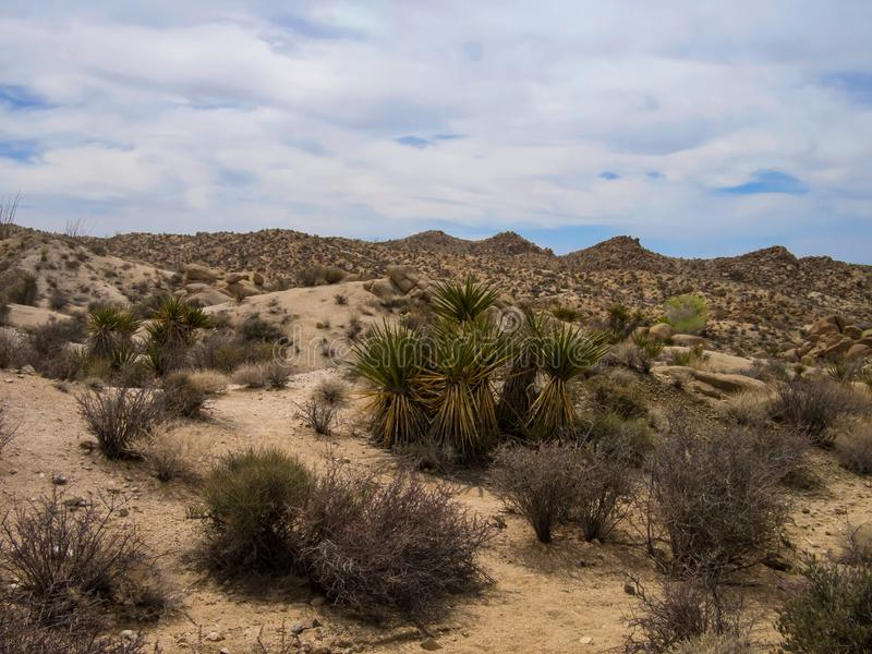 Joshua Tree National Park Desert royaltyfri foto