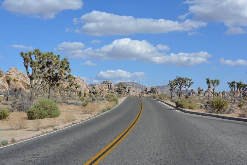 Joshua Tree National Park Desert Kalifornien royaltyfri fotografi