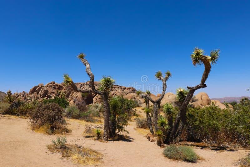 Joshua Tree National Park, desierto de Mojave imágenes de archivo libres de regalías