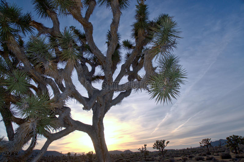 Joshua Tree National Park HDR stock image