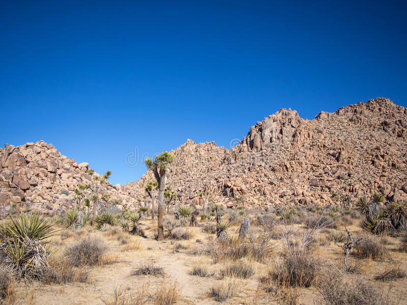 Joshua Tree National Park. Is immense, nearly 800,000 acres, and infinitely variable. It can seem unwelcoming, even brutal during the heat of summer when, in royalty free stock photography