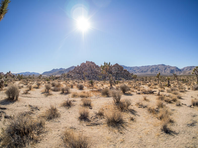 Joshua Tree National Park. Is immense, nearly 800,000 acres, and infinitely variable. It can seem unwelcoming, even brutal during the heat of summer when, in royalty free stock photos