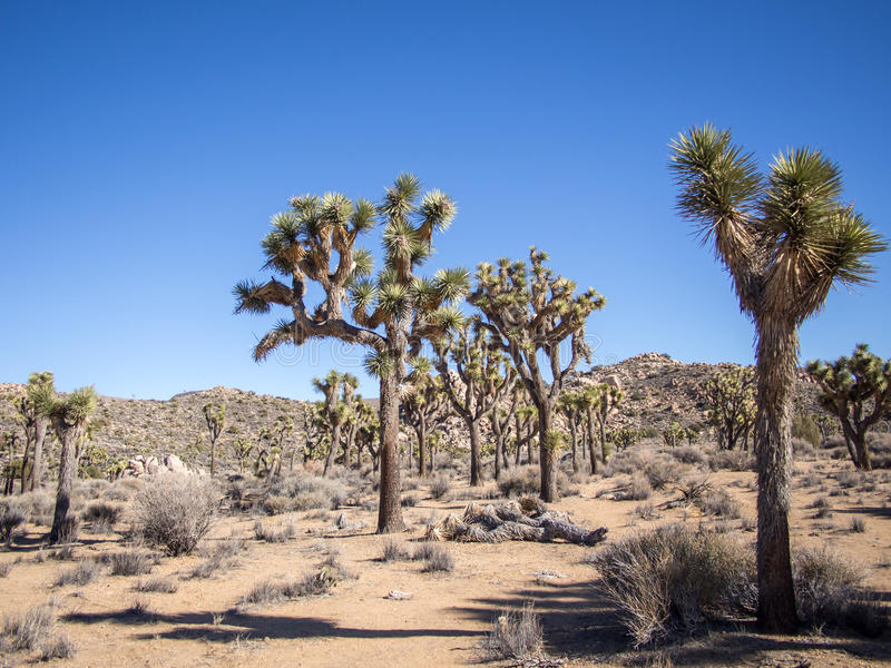 Joshua Tree National Park. Is immense, nearly 800,000 acres, and infinitely variable. It can seem unwelcoming, even brutal during the heat of summer when, in stock photography