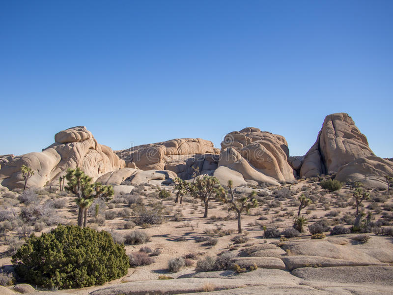 Joshua Tree National Park. Joshua Tree National Park is immense, nearly 800,000 acres, and infinitely variable. It can seem unwelcoming, even brutal during the royalty free stock photography