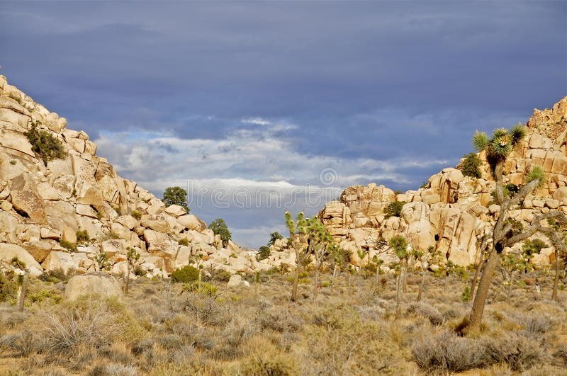 Joshua Tree National park. Ecological crossroads, where the high Mojave Desert meets the low Colorado Desert royalty free stock photography