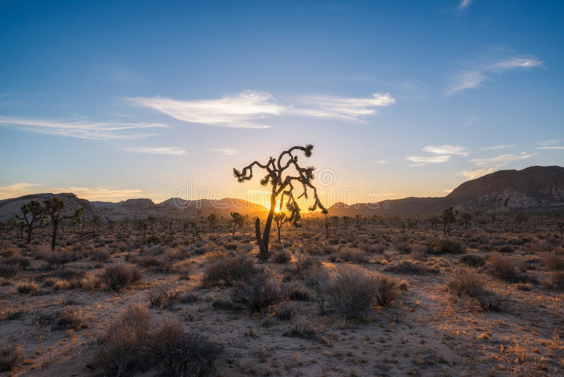 Joshua Tree National Park-zonsopgang stock afbeelding