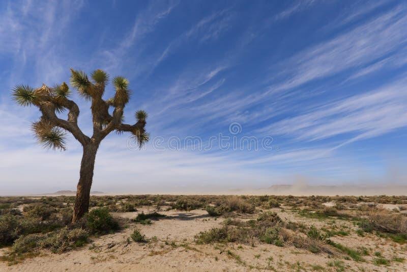 Joshua tree på El-hägring den torra laken royaltyfri bild