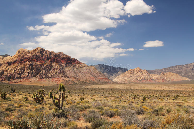 Joshua tree. Panorama with joshua tree at red rock canyon in Nevada stock images