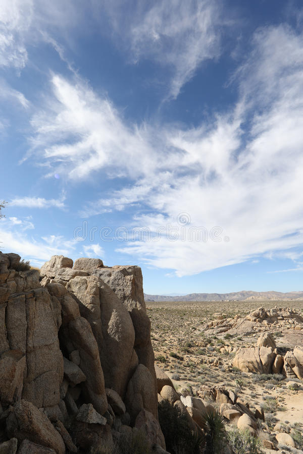 Joshua Tree royalty free stock photos