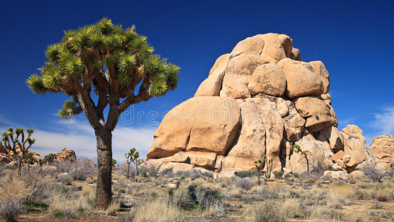 Joshua Tree and Rock Formations royalty free stock photos
