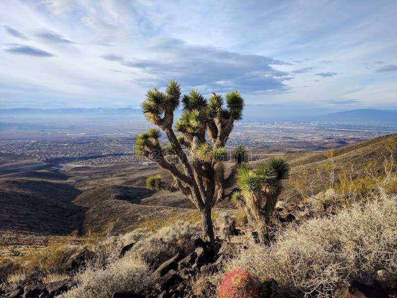 Joshua Tree som förbiser Las Vegas arkivbild