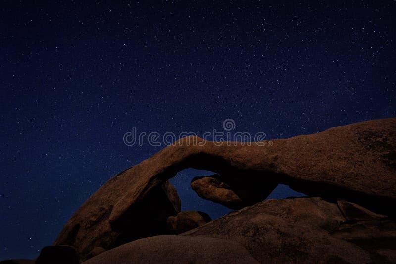 Joshua Tree Starry Night imagen de archivo libre de regalías