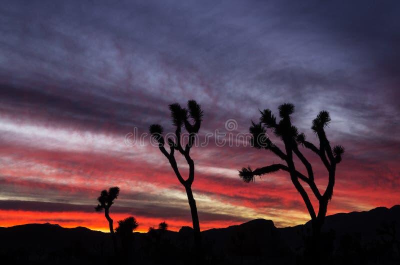 Joshua Tree Sunset arkivfoton