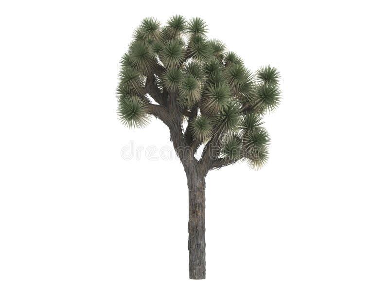 Joshua_tree_ (Yucca_brevifolia) royalty illustrazione gratis