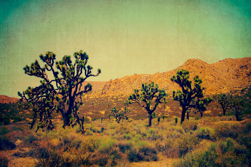 Joshua Trees in California Desert royalty free stock photos