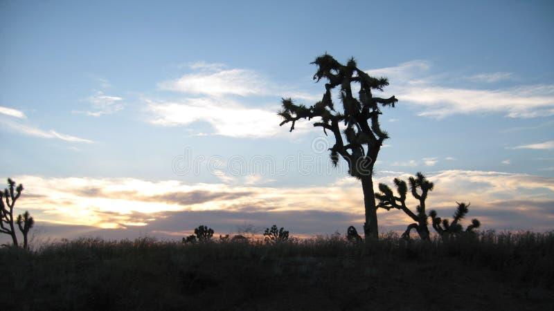 Joshua Trees på Grand Canyon den västra kanten i nordvästliga Arizona royaltyfri foto