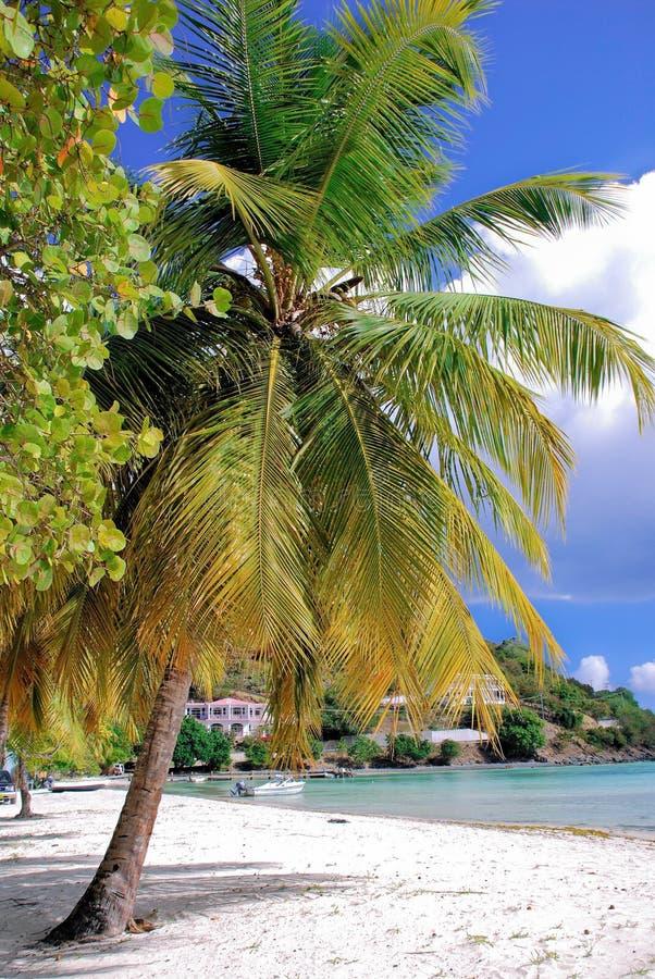 Jost Van Dyck British Virgin Islands. Palm trees on the beautiful beach of Jost Van Dyck British Virgin Islands stock images