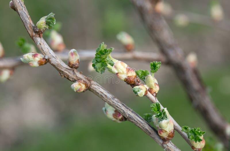 Josta na primavera fotografia de stock