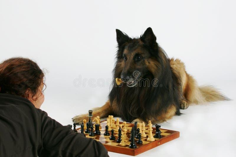 Jouer aux échecs avec le crabot photos stock