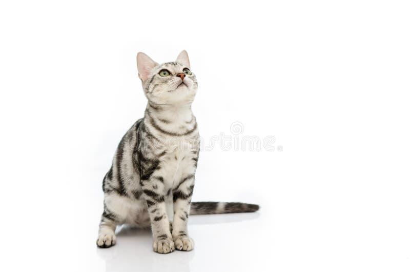 Jouer de chat photo stock