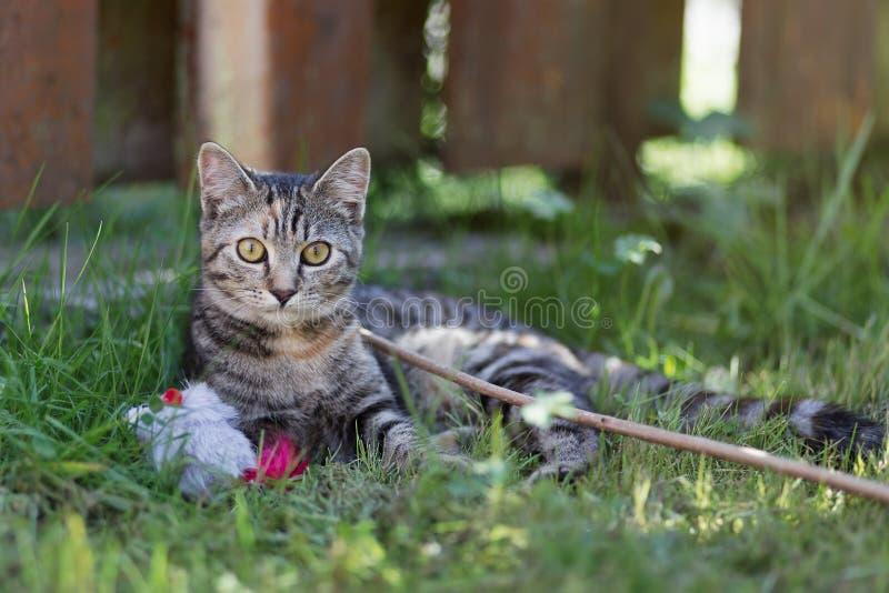 Jouer de chat photographie stock