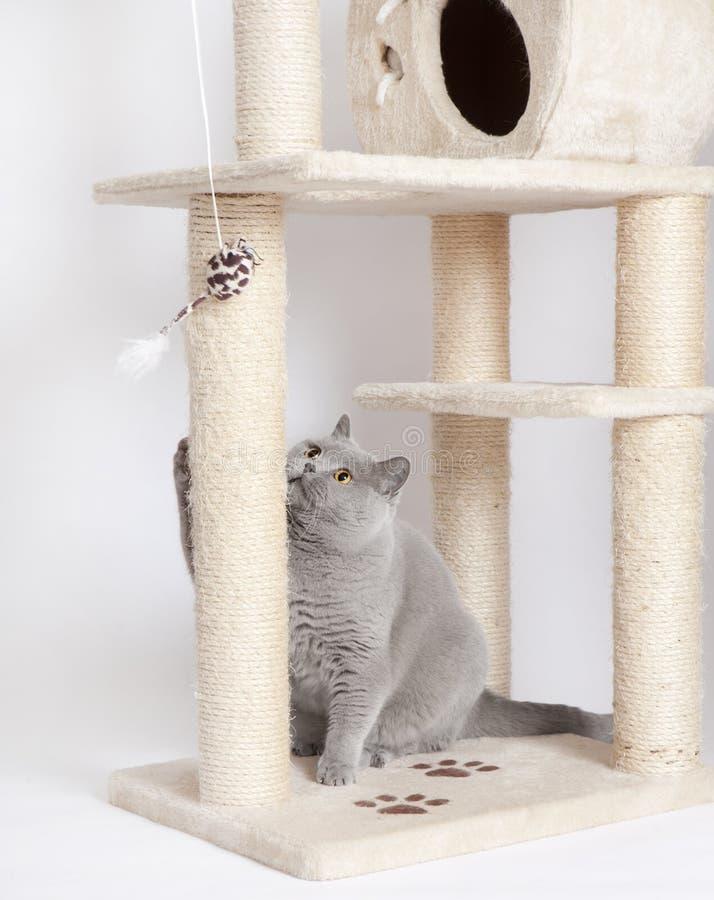 Jouer de chat photo libre de droits