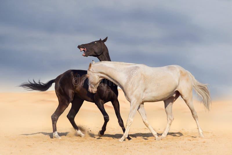 Jouer de deux chevaux image libre de droits