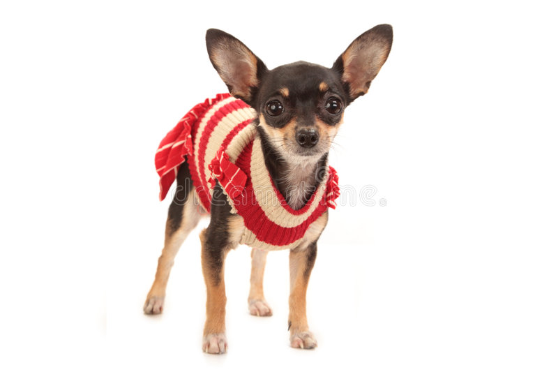 jouet de chien terrier photo stock