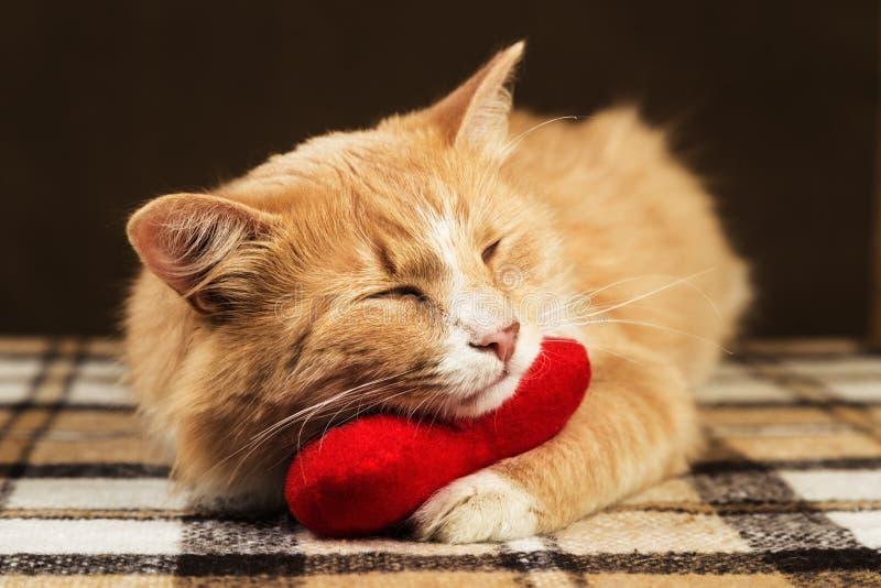 Jouet mou étreignant endormi de coeur de peluche de chat pelucheux rouge photographie stock