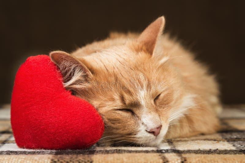 Jouet mou étreignant endormi de coeur de peluche de chat pelucheux rouge photo libre de droits