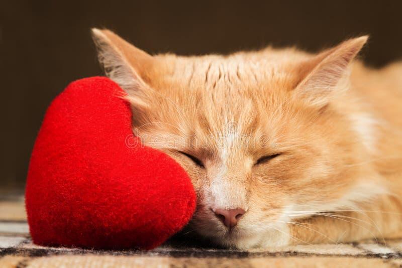 Jouet mou étreignant endormi de coeur de peluche de chat pelucheux rouge images stock