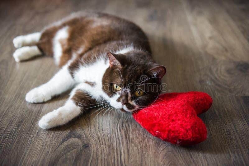 Jouet rouge étreignant endormi de coeur de peluche molle de chat pelucheux drôle photographie stock libre de droits