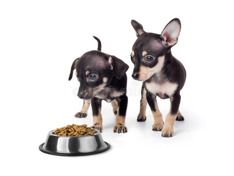 Jouet Terrier de chiot mangeant de la nourriture photo libre de droits
