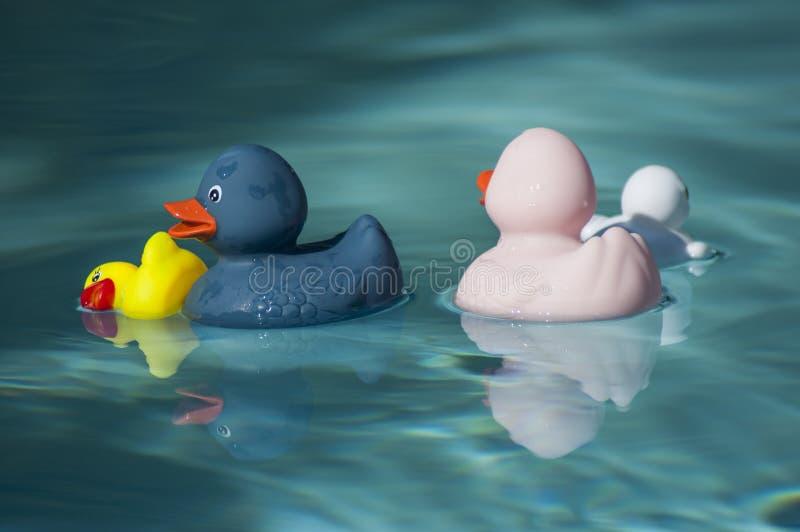 jouets en caoutchouc de canard de famille dans la piscine photographie stock