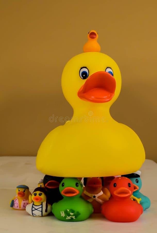 Jouets en caoutchouc de canard image stock