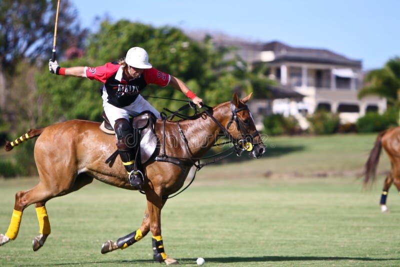 Joueur mâle de polo images libres de droits