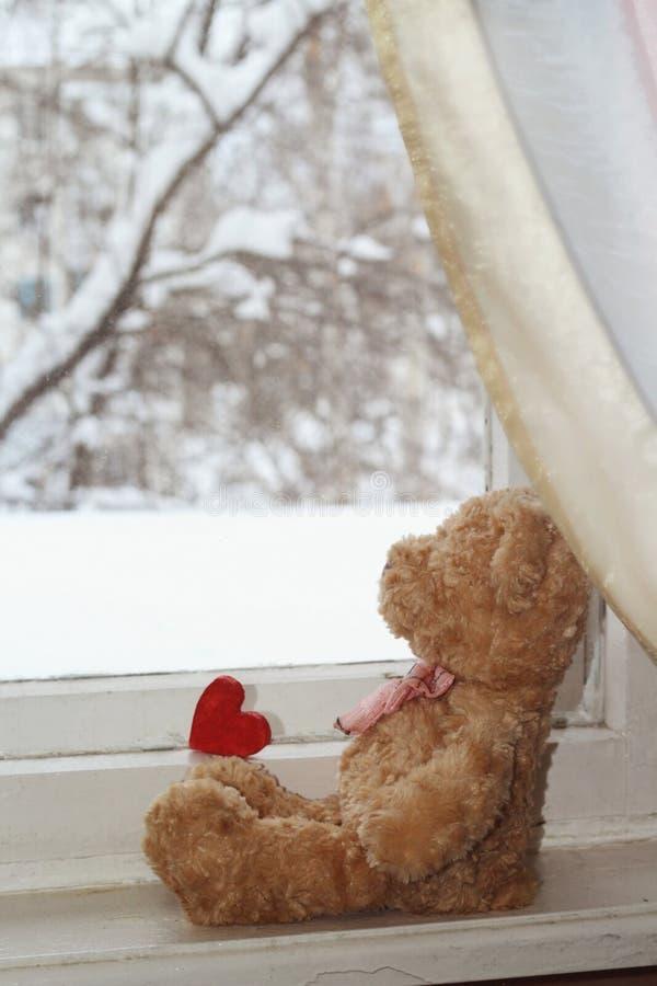 Jouez la fourrure regardant la fenêtre du jardin d'hiver image libre de droits