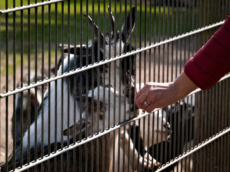 Jour au zoo images libres de droits
