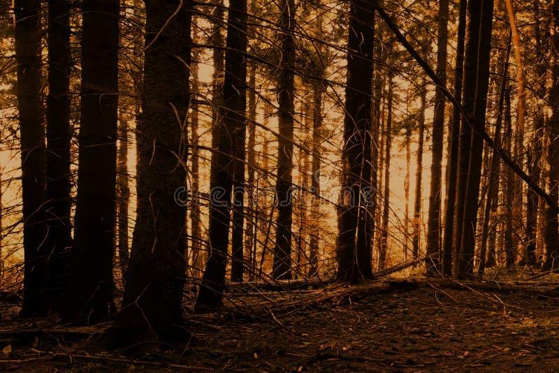Jour brumeux dans la forêt images libres de droits