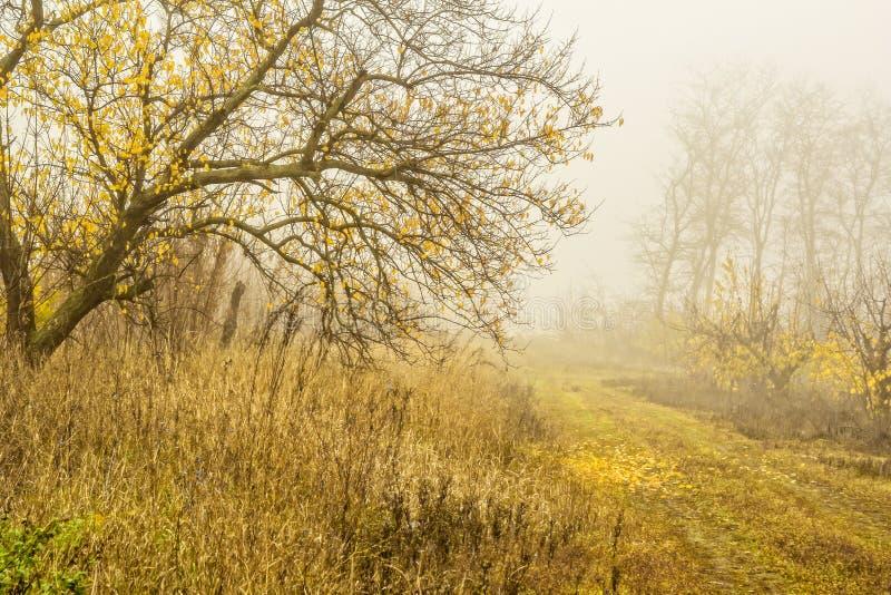 Jour brumeux dans la forêt d'automne photographie stock libre de droits