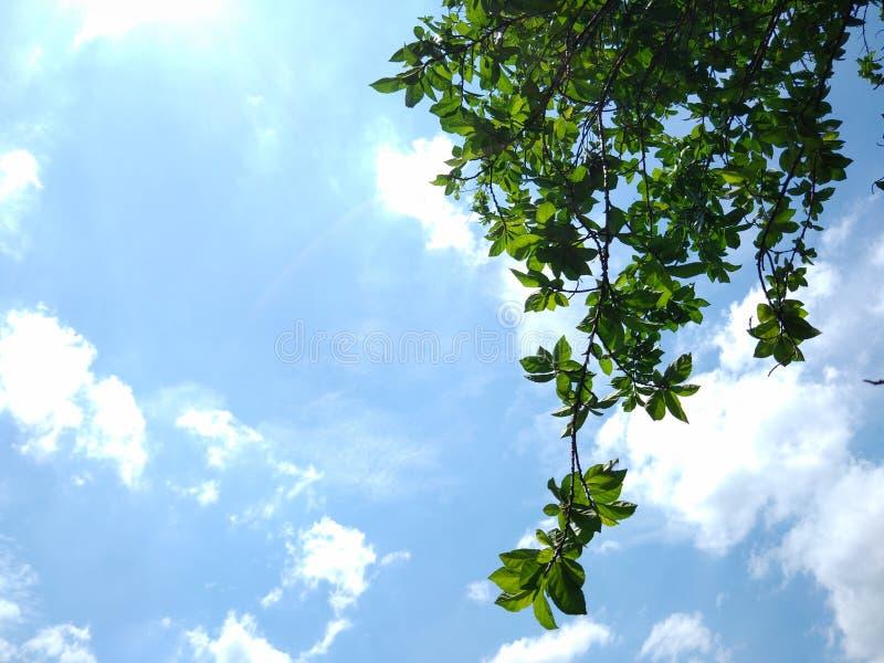 Jour chaud, jour de soleil, le ciel bleu de beau jour les nuages que blancs verdissent laisse l'air frais photographie stock libre de droits