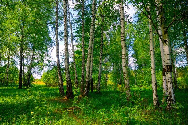 Jour d'été dans une belle forêt image libre de droits