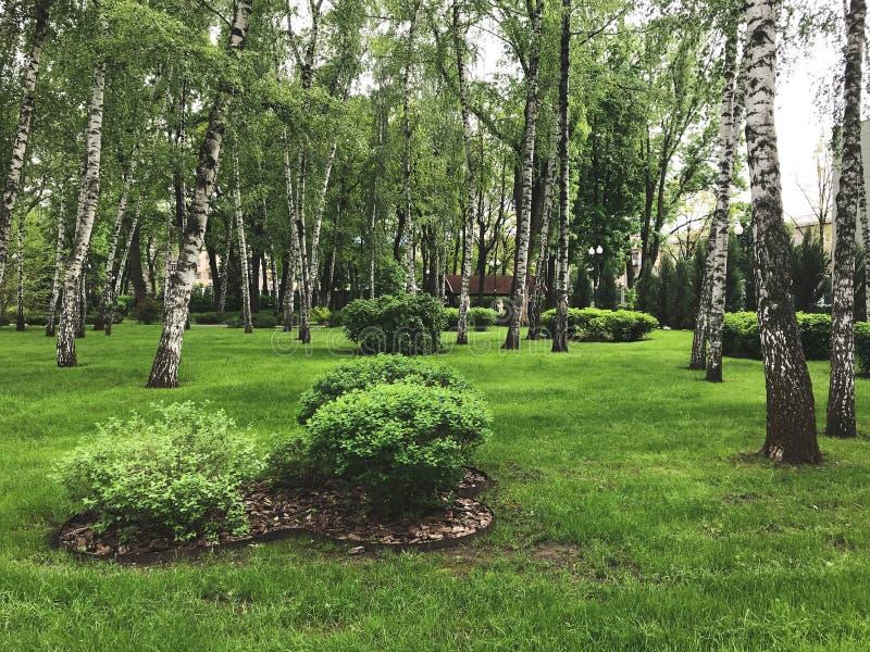 Jour d'été en parc de Gorki, ville de Kharkov, Ukraine photographie stock libre de droits
