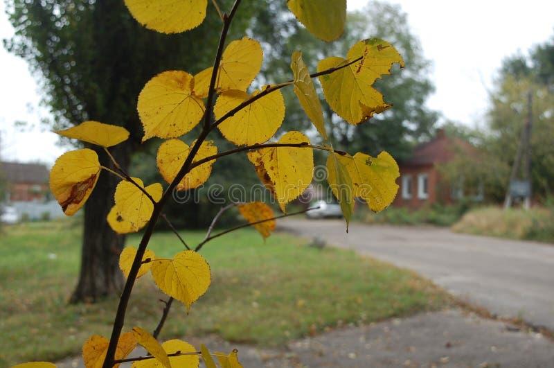 Jour d'automne image stock