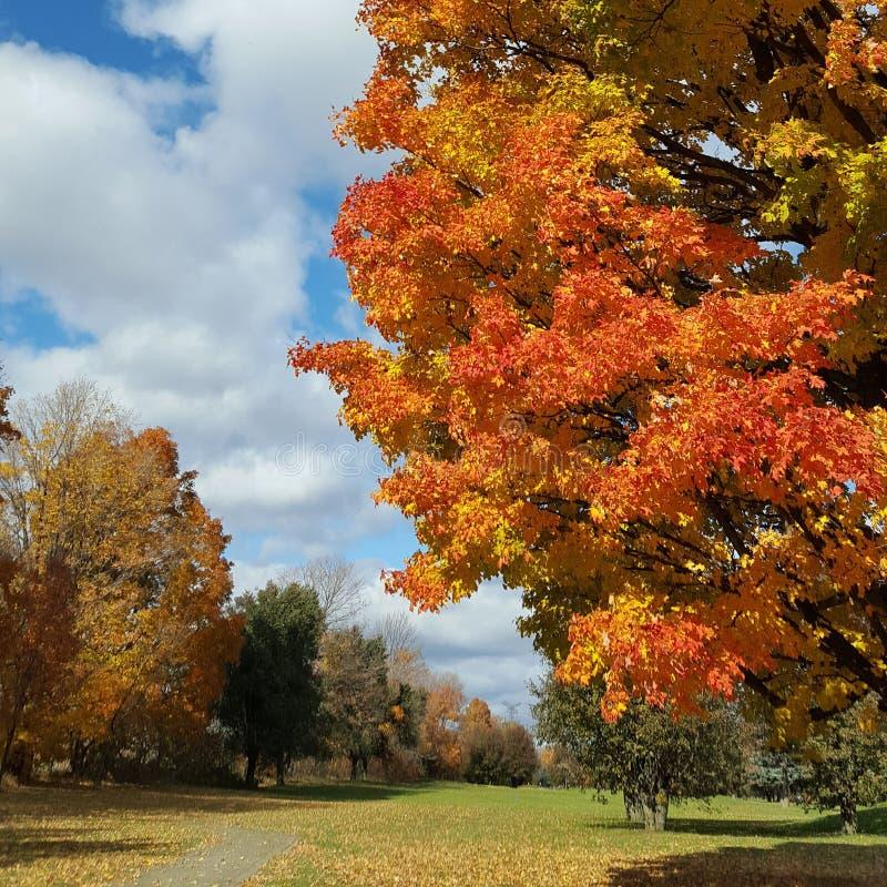 Jour d'automne avec un arbre glorieux et coloré d'automne images stock