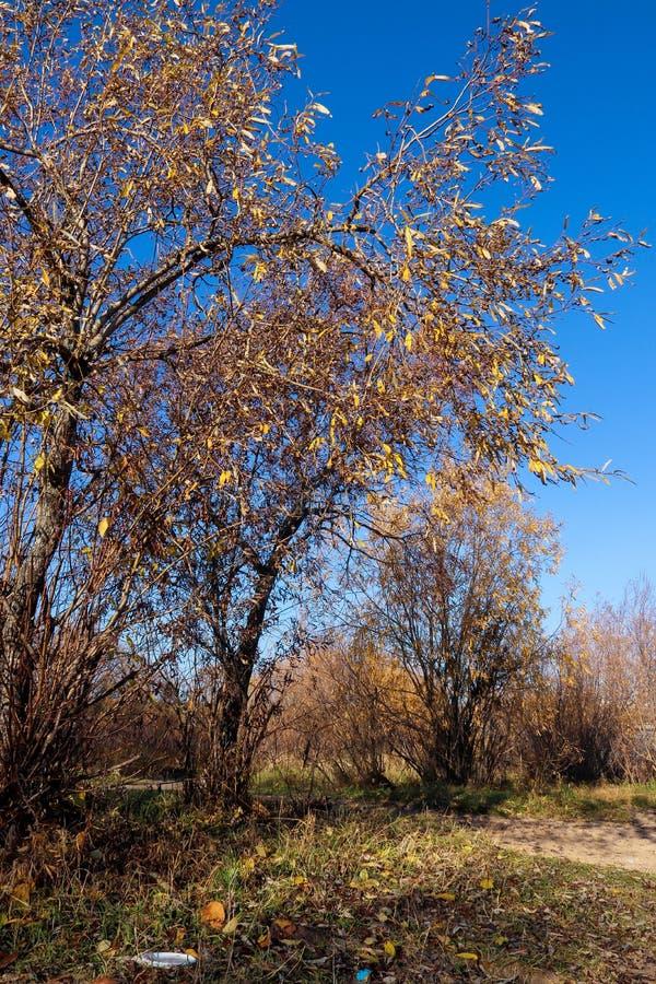 Jour d'automne dans Arkhangelsk Vue de la rivière Dvina du nord et port fluvial dans Arkhangelsk image libre de droits