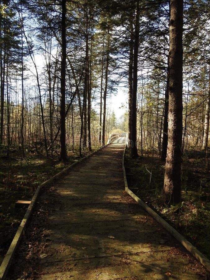 Jour d'automne dans le Canada photos stock