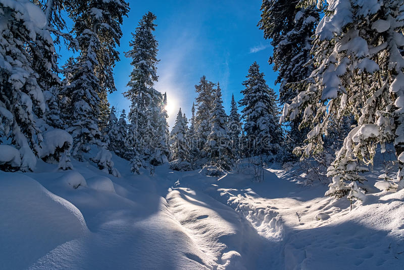 Jour d'hiver dans les bois photographie stock